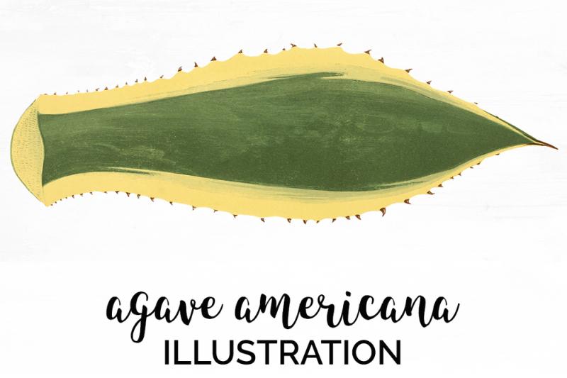 leaf-clipart-agave