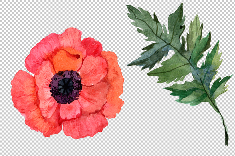 red-poppy-png-watercolor-flowers