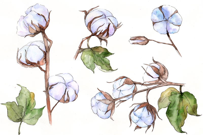 flower-soft-cotton-png-watercolor-set