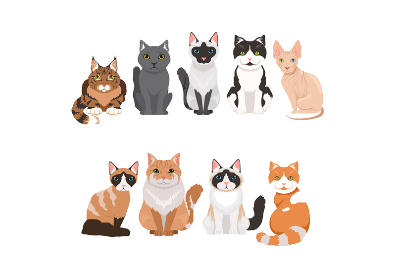 domestic-cats-in-cartoon-style