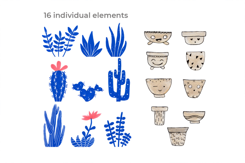 cactus-and-succulents-collection