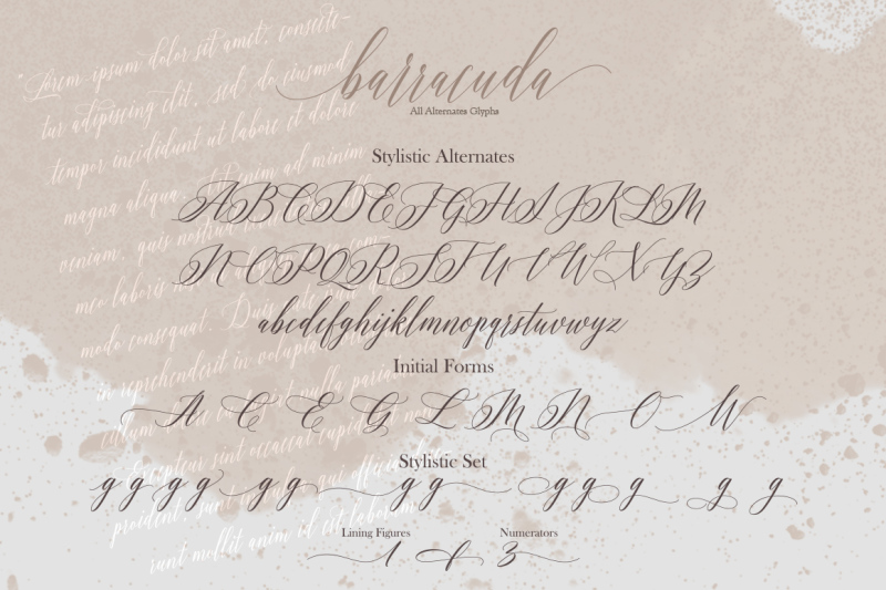 barracuda-script