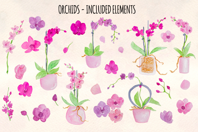 27-pretty-watercolor-orchid-flowers