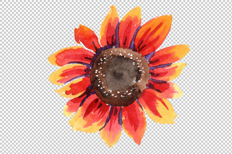 sunflower-red-flower-watercolor-png-set