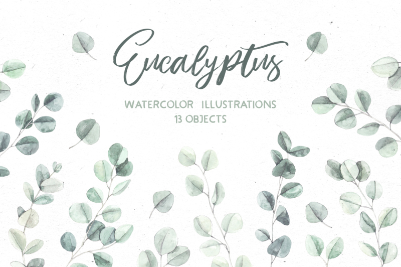 eucalyptus-watercolor-illustrations