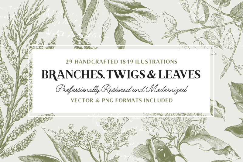 29-branches-twigs-and-leaves