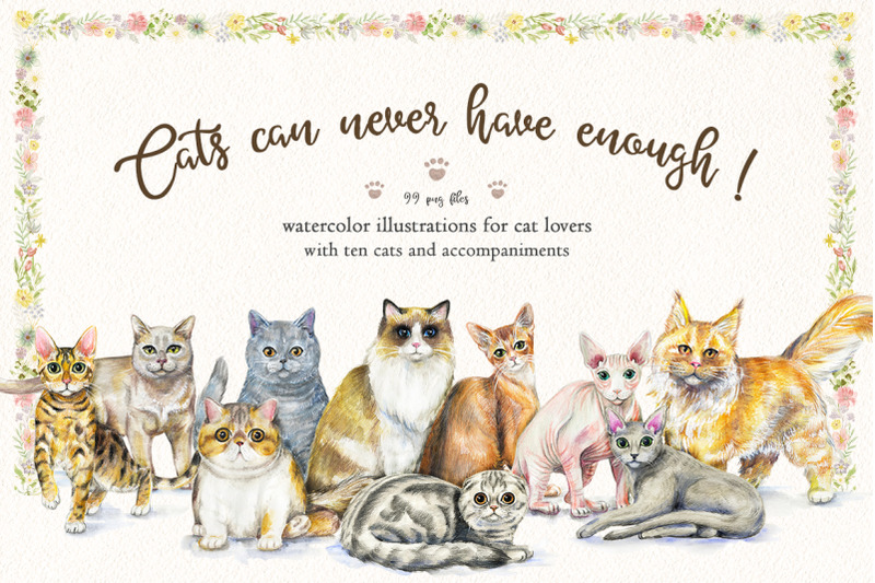 cats-can-never-have-enough