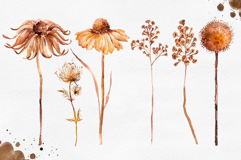 herbarium-master-collection