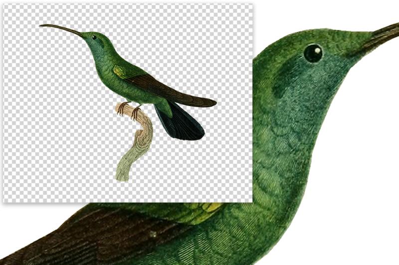 birds-green-hummingbird