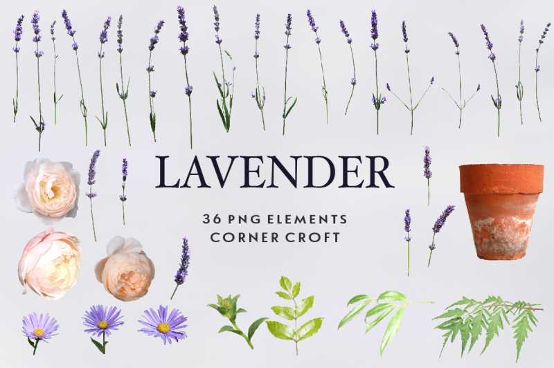 lavender-clipart-isolated-lavender-images