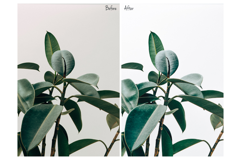 fresh-look-lightroom-desktop-and-mobile-presets