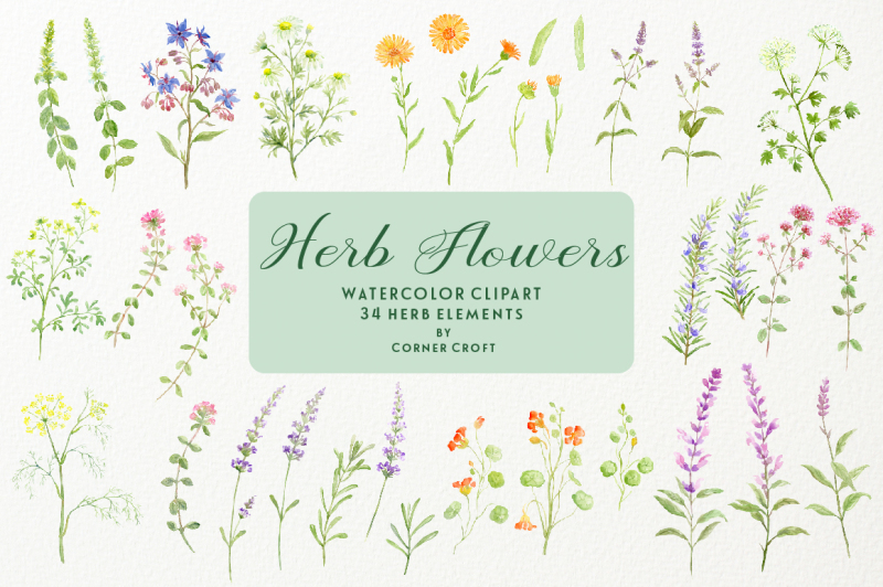 herb-flower-collection
