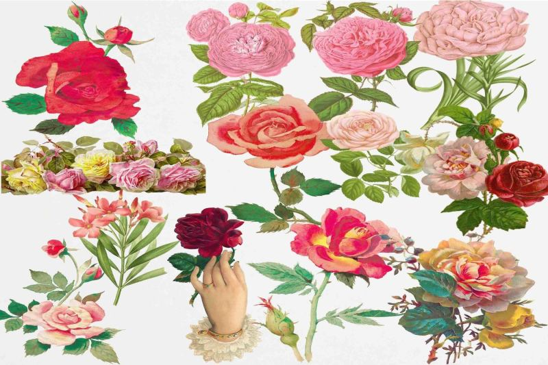 roses-clipart