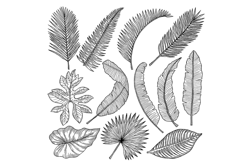 floral-hand-drawn-pictures-of-tropical-leaves-vector-pictures-set