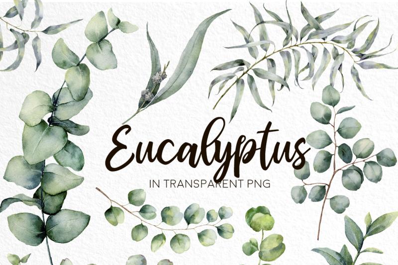 eucalyptus-mania-watercolor-bundle