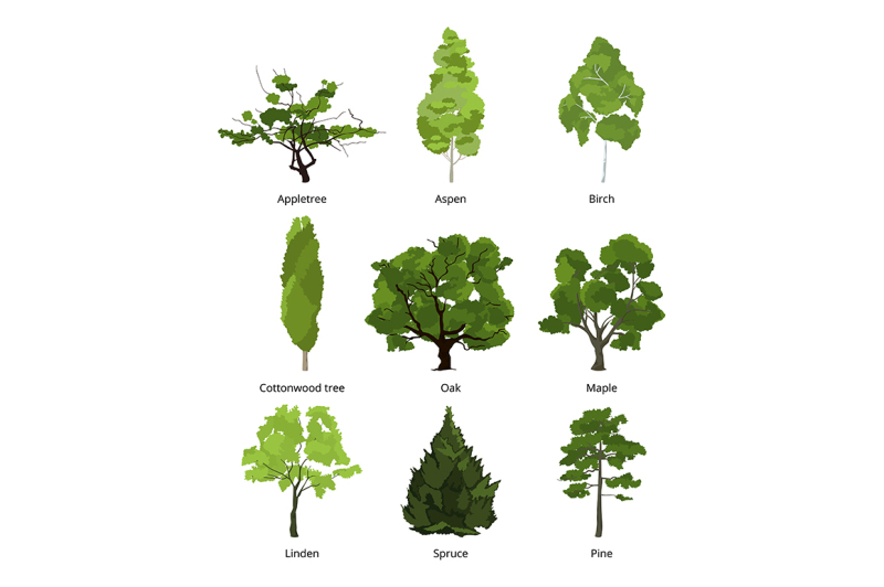 vector-set-of-green-garden-trees-nature-illustrations-isolate-on-whit