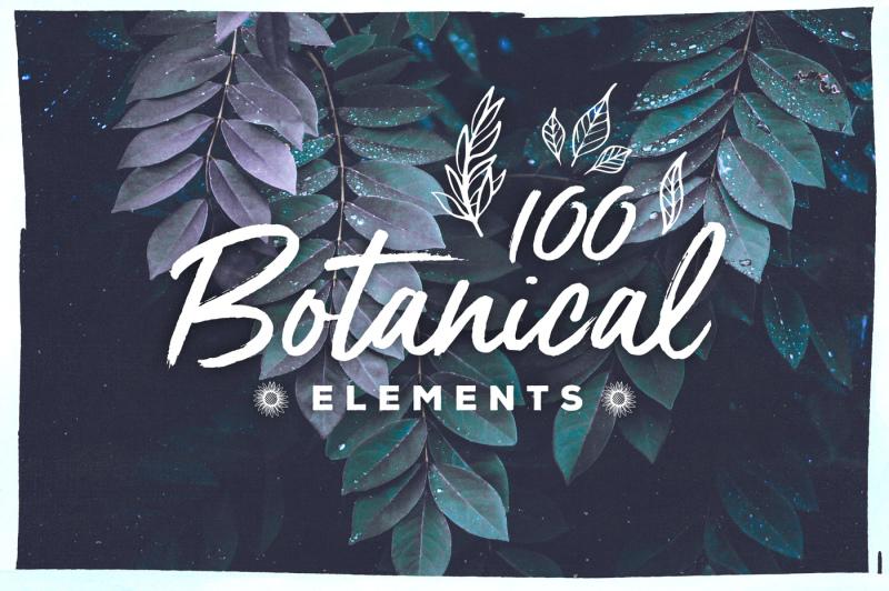100-handsketched-botanical-elements