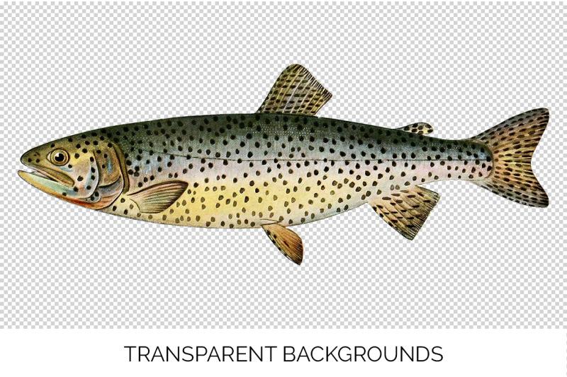 trout-clipart