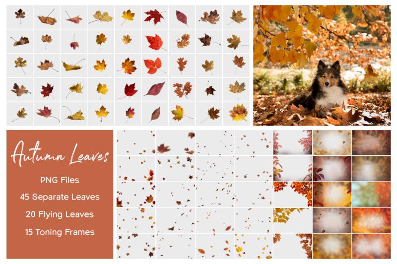 autumn-leaves-overlays