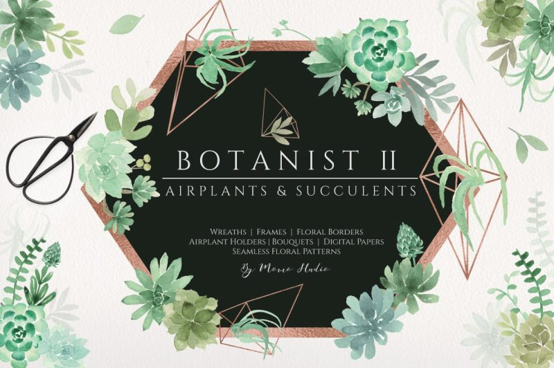 botanist-ii-airplants-and-succulents-greenery-florals