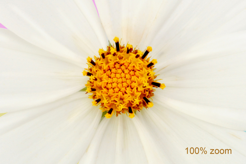 white-flower-isolated-with-clipping-path-1-png-1-jpg-file