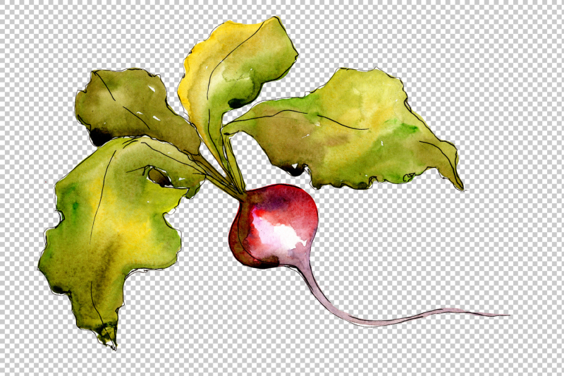red-radish-vegetables-png-watercolor-set