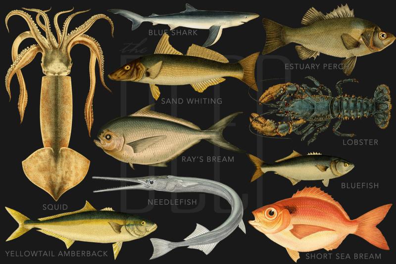 the-deep-sea-creature-illustrations