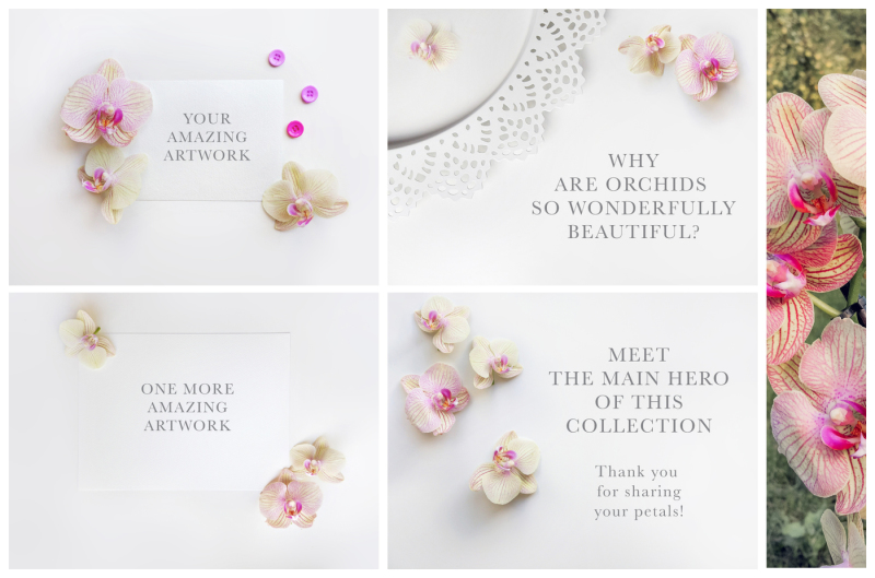 orchid-stock-photo-set