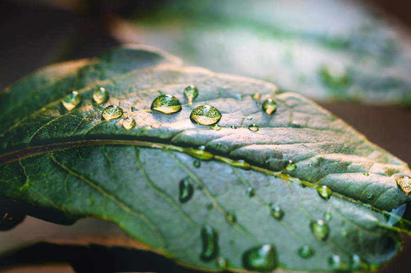 leaf-with-drops