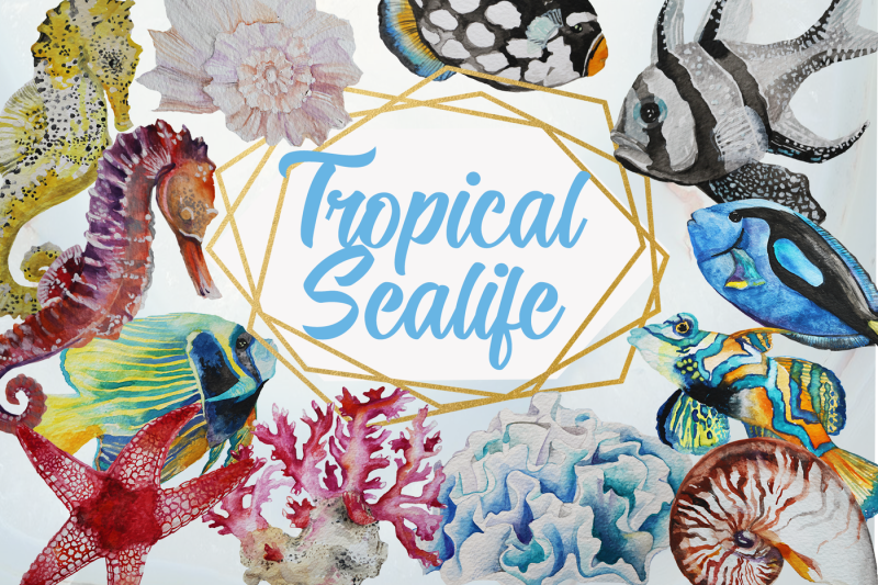 tropical-sea-life