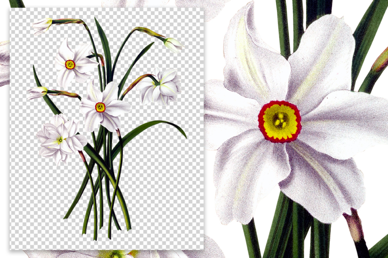 flowers-vintage-white-daffodils