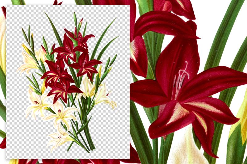 flowers-vintage-white-and-scarlet-gladiolus