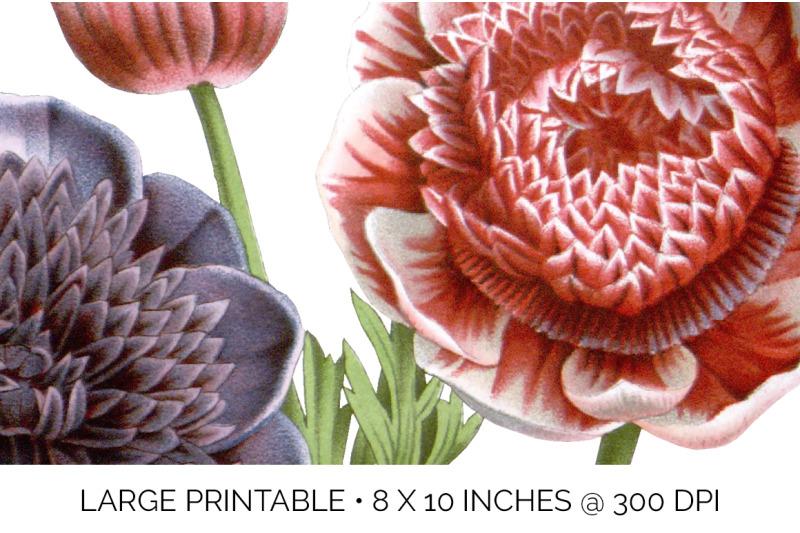 bouquet-anemones-bouquet