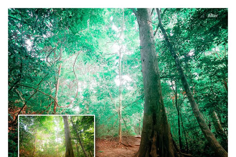 75-nature-lightroom-presets