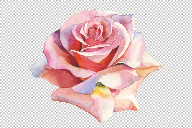 pink-roses-realistic-png-watercolor-set