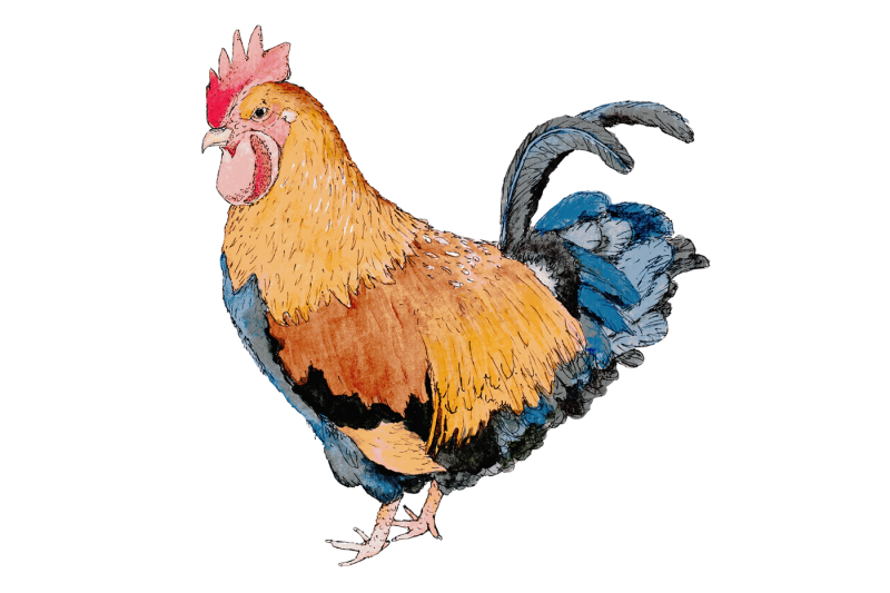 watercolor-chooks-watercolor-clip-art-png-jpeg