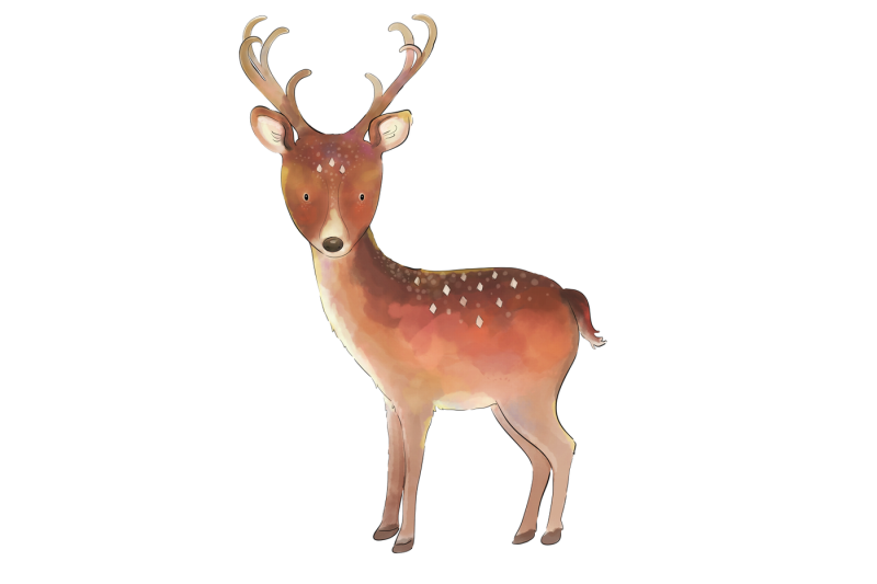 magical-woodland-11-illustrations-animals-and-elements