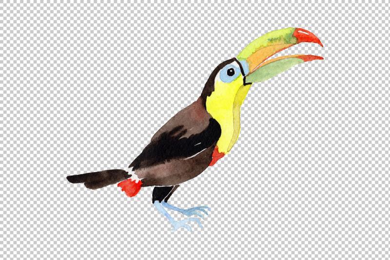 tropical-bird-toucan-png-watercolor-set