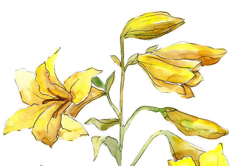 bouquet-of-yellow-lilies-png-watercolor-flower-set
