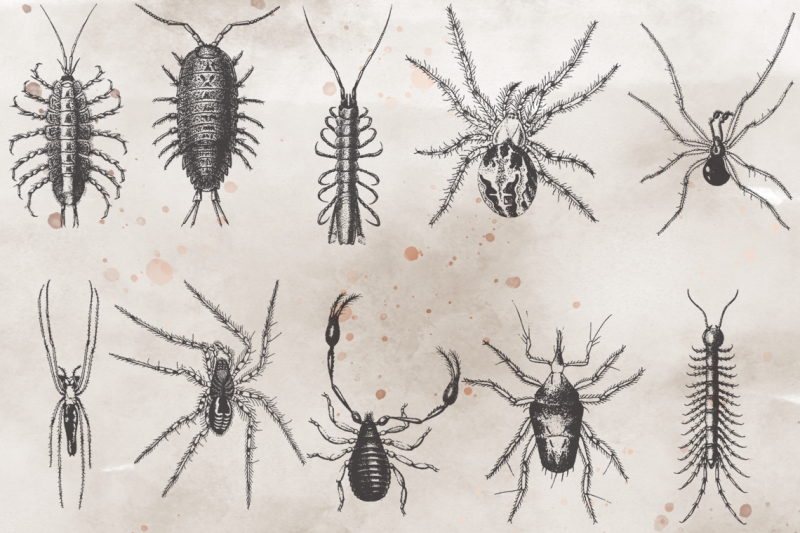vintagevectorized-insects-clipart