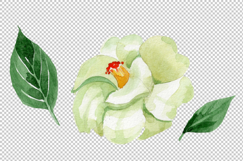 white-camellia-wildflower-png-watercolor-set-nbsp