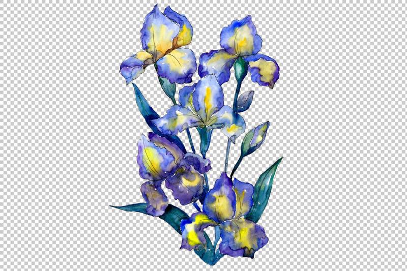 bouquet-of-blue-irises-png-watercolor-set