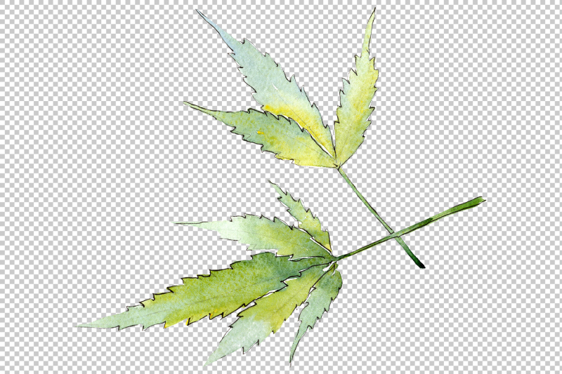 cannabis-leaves-png-watercolor-set