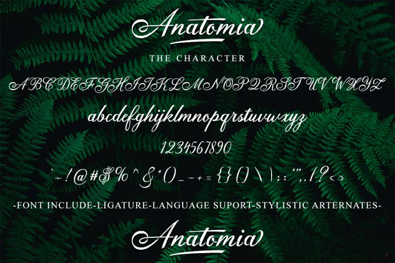 anatomia-script
