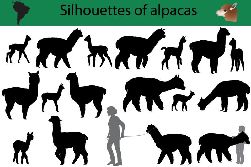 silhouettes-of-alpacas