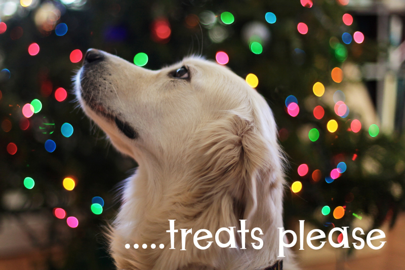 christmas-puppies-font-pair