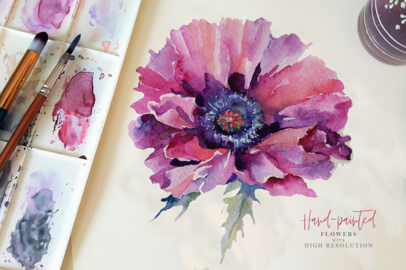 pink-poppy-flower-png-watercolor-set
