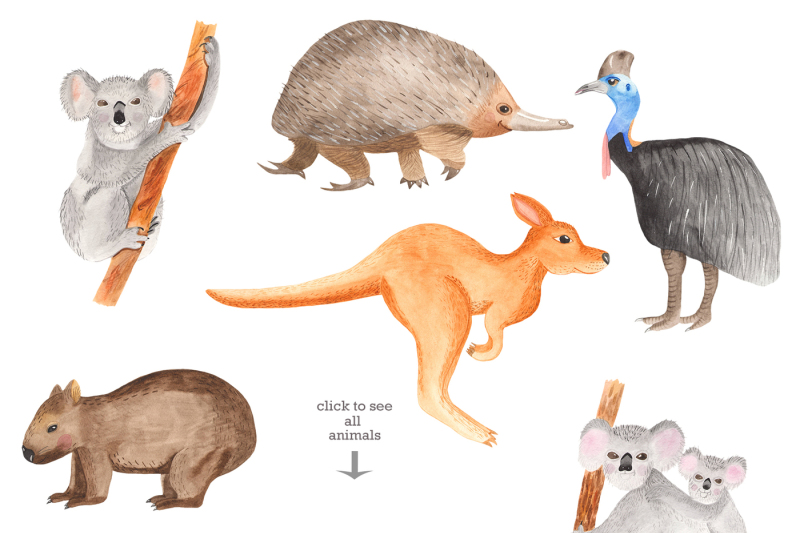 australian-animals-and-palnts-watercolor-clipart-frames-cards