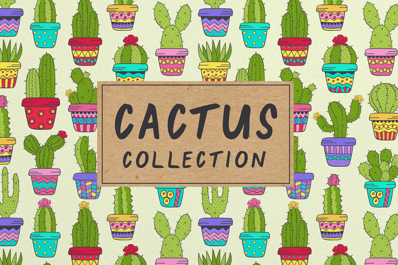 cactus-collection