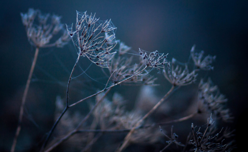 the-stems-of-wild-grass